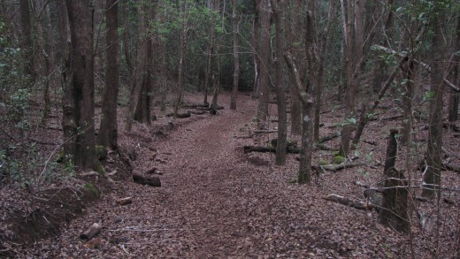 Koele Trail