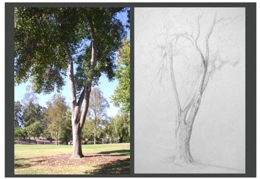 This is the photo and my sketch of the same tree at Balboa Park in San Diego.