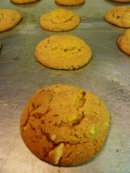 Baked raisin molasses sugar cookies still on greased cookie sheet.