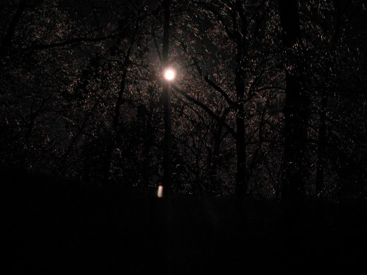 Moonlit Night  Photo taken by my daughter