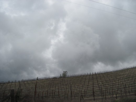 Dark storm clouds move in over vineyard.