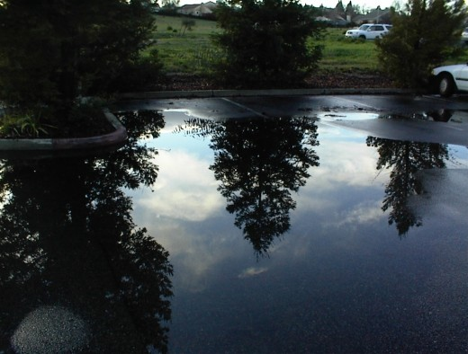 A group of tree reflections in large puddle