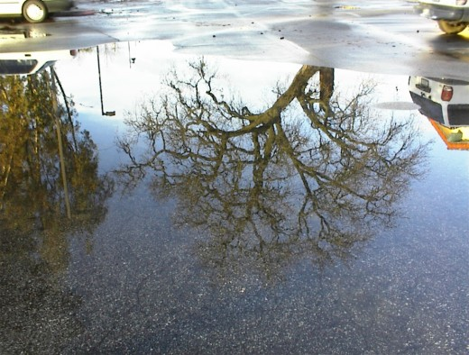 A large tree reflection.