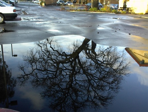 Different size puddles and light angles change how the tree is reflected.