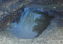 This puddle is like a miniature picture frame of an upside-down world.