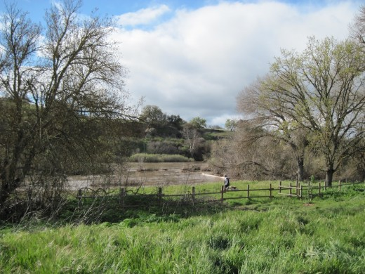 Woman walks her dog beside the Salinas River in  Paso Robles in March, 2011. Please click to enlarge picture.