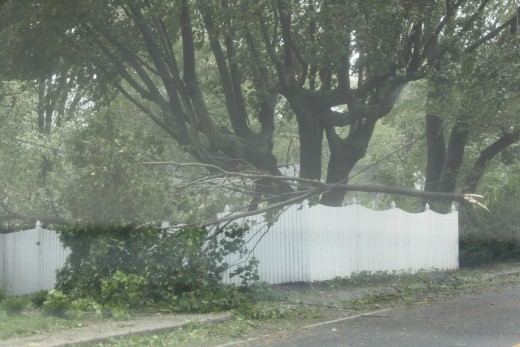 tree limb on power line after Tropical Storm Irene moved through.