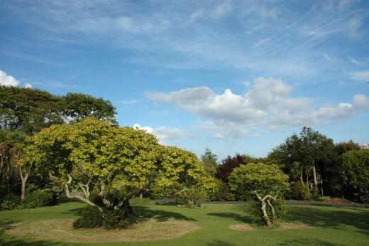 Penzance's sub-tropical Morrab Gardens