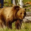 grizzbass profile image