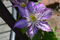 Some of My Favorite Flowers - A Photo Gallery