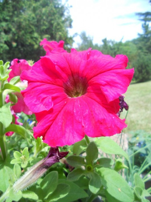 Summer Flower. ©2011 Sarah Haworth.