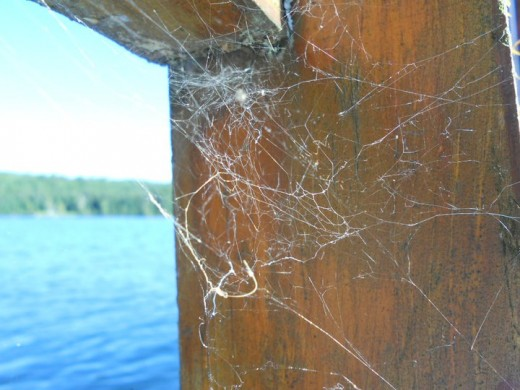 Spider Webs with Water Background. ©2011 Sarah Haworth.