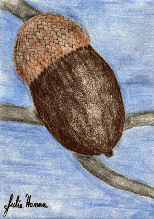 The acorn I drew for a card I am making.