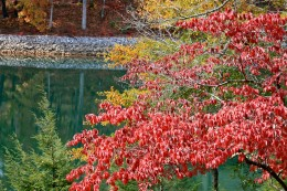 Fall is a beautiful season and with it brings ragweed allergies as well as the start of cold and flu season