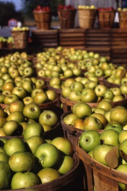 Make sure you compare apples to apples when it comes to credit card processing proposals!