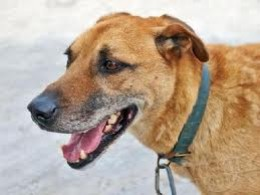 Target- once a homeless female dog-adopted and brought to the US but now dead