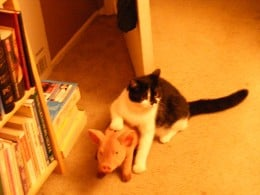Munchkin with his pig friend.