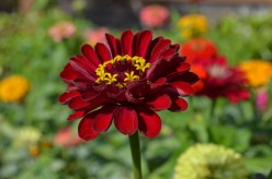 Red Flowers Growing in Gardens - A Photo Gallery