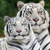manisha2877 profile image