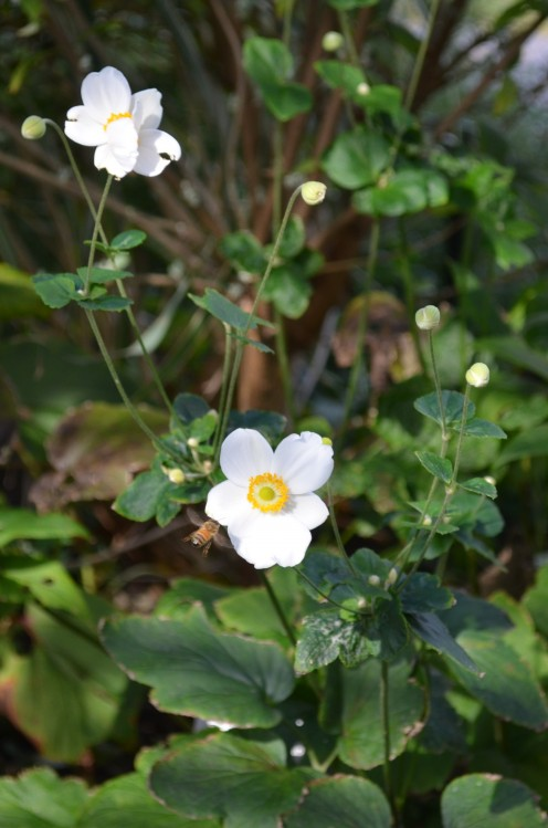 Photo 2 - Little White Flowers