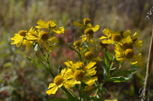 Photo 8 - Some sweet yellow flowers we found on our nature walk.