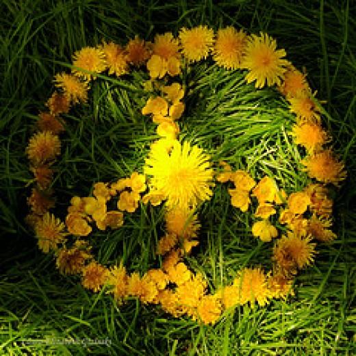 Peace from Shadow Cat - no computor :o{ Source: flickr.com
