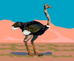 Ostriches are birds that can't fly!