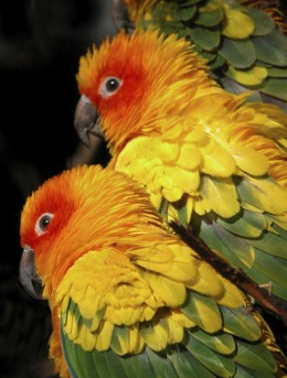 And the Parrots.