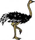 Juma the Ostrich.