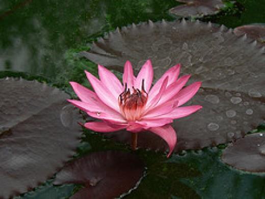Beauty from prakhar Source: flickr.com