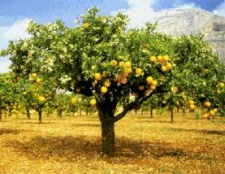 How fruits are quality-tested for ripeness: sweetness, firmness, and color