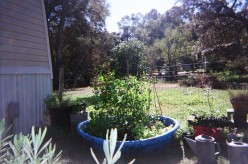 Gardening In Containers, New Life For An Old Kiddie Pool