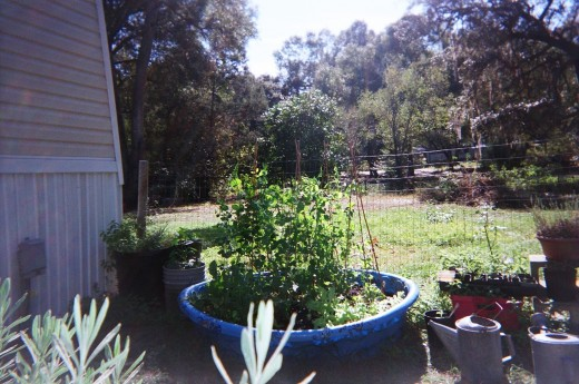 Fall garden in the recyled kiddie pool.  Sugar snap peas, lettuce, greens and (hopefully) some spinach.  Next to the pool are some other containers that work well, a large paint bucket, and assorted tubs collected over the years.