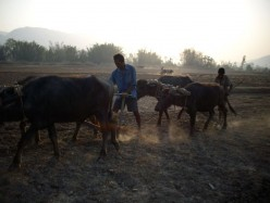 Life in a Farm in Nepal