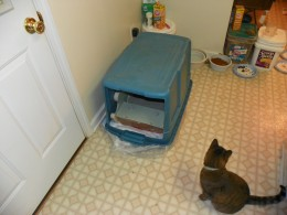 It keeps down odors, it keeps messes out of sight, it gives your cat privacy and best of all it's automatic!