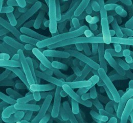 Listeria monocytogenes is a foodborne pathogen that poses serious risk to certain parts of the population.