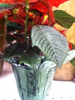 Foil Cover on Poinsettia
