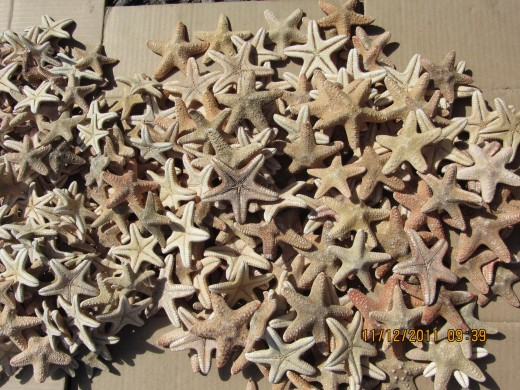 The multicab mistakenly dropped us off at Shangri-la Mactan instead of the Liberty Shrine. When we were walking towards the shrine, we saw a store selling lots of dried up starfish :(