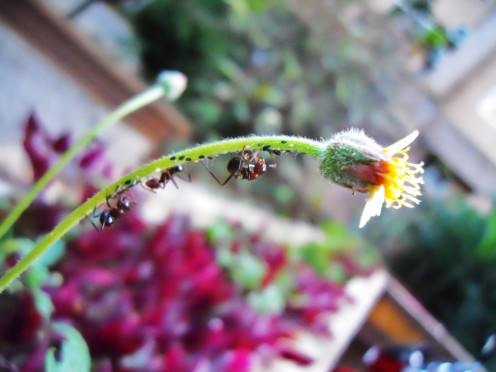 The ant bridge to flower land.