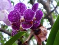 Beautiful flowers - The ordinary and the exotic