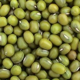 Green Mung Bean - also mungbean, mung, green or golden gram (Vigna radiata) Photo credits: hiwtc.com