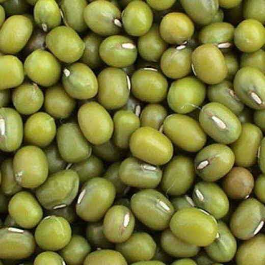 Green Mung Bean - also mungbean, mung, green or golden gram (Vigna radiata) Photo credits: hiwtc.com