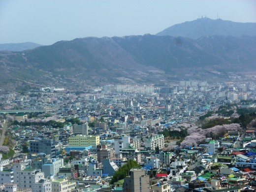 This is a view from the tower in Jinhae while attending the Jinhae Cherry Blossom Festival.