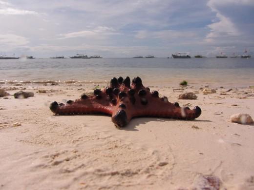 Sea star by Alona beach