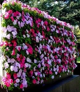 Apna Garden Design