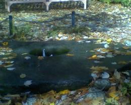 Pliny's Fountain at Tower Hill Botanic Garden