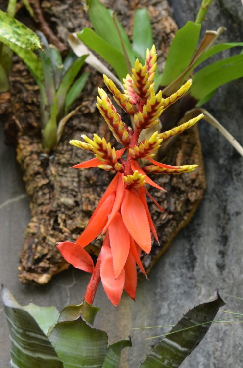Photo 4 - A Yellow, orange, and brown tropical flower.  So interesting!