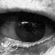 LHwritings profile image
