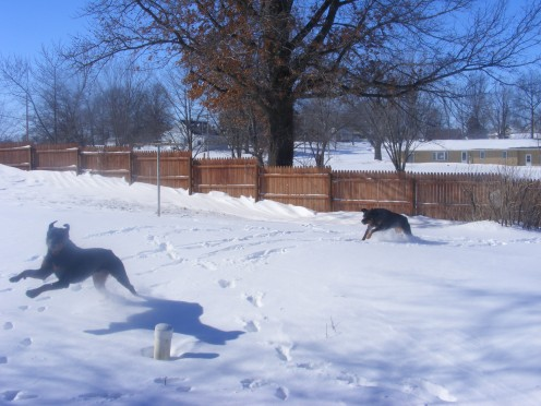 How to stop fence jumping in dogs