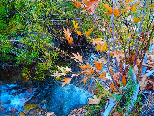 I framed this shot of a deep blue creek with reddish leaves to create a frame of sorts..